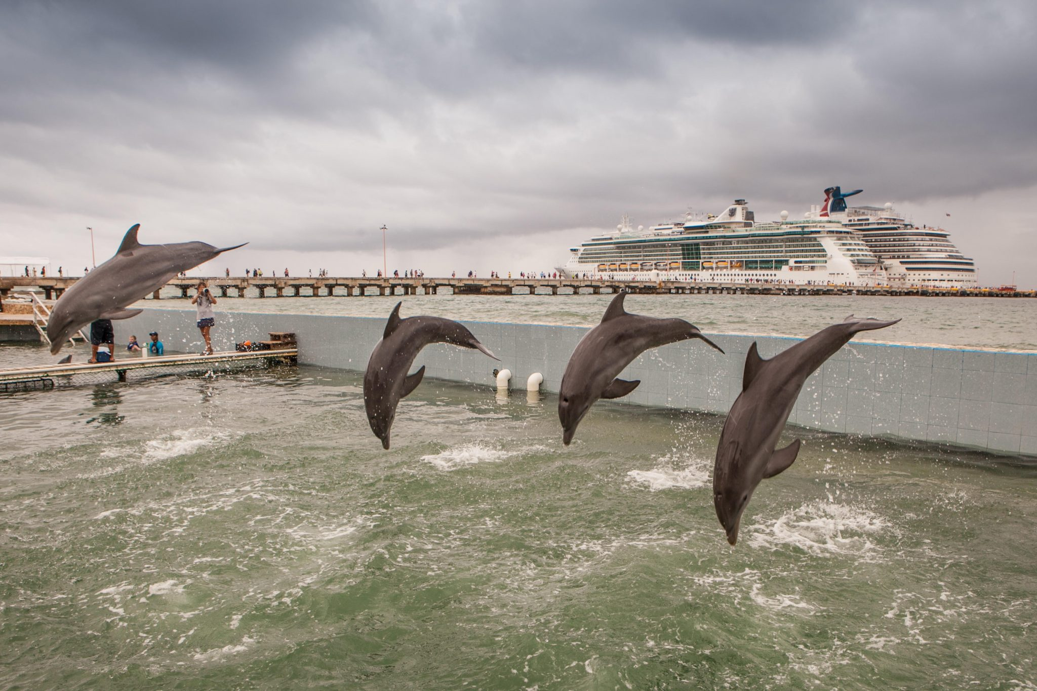 J0DR79 Captive dolphins perform for cruise passengers at the COSTA MAYA  Resort, MEXICO.