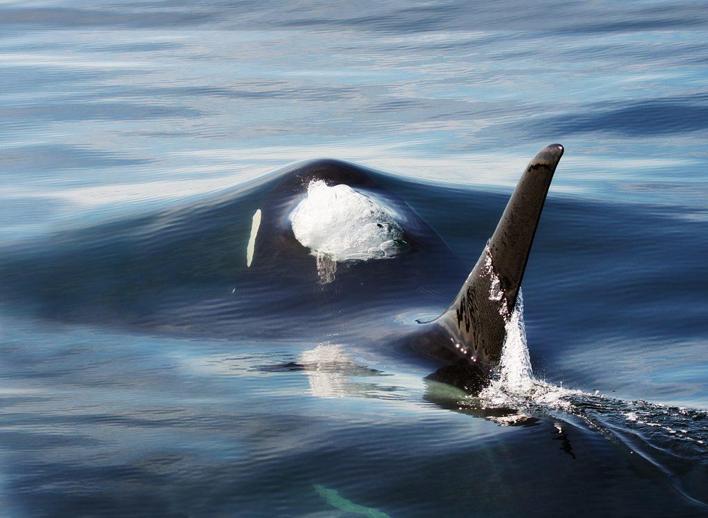 orca-rob-lott-3