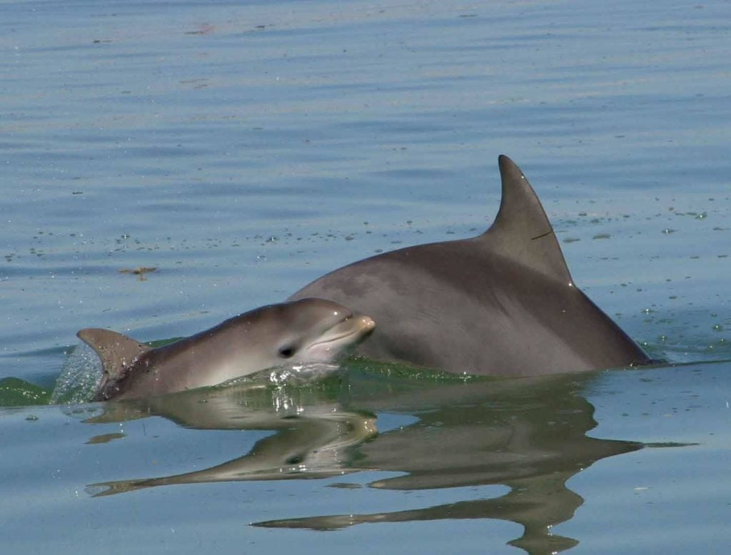 How do dolphins give birth?