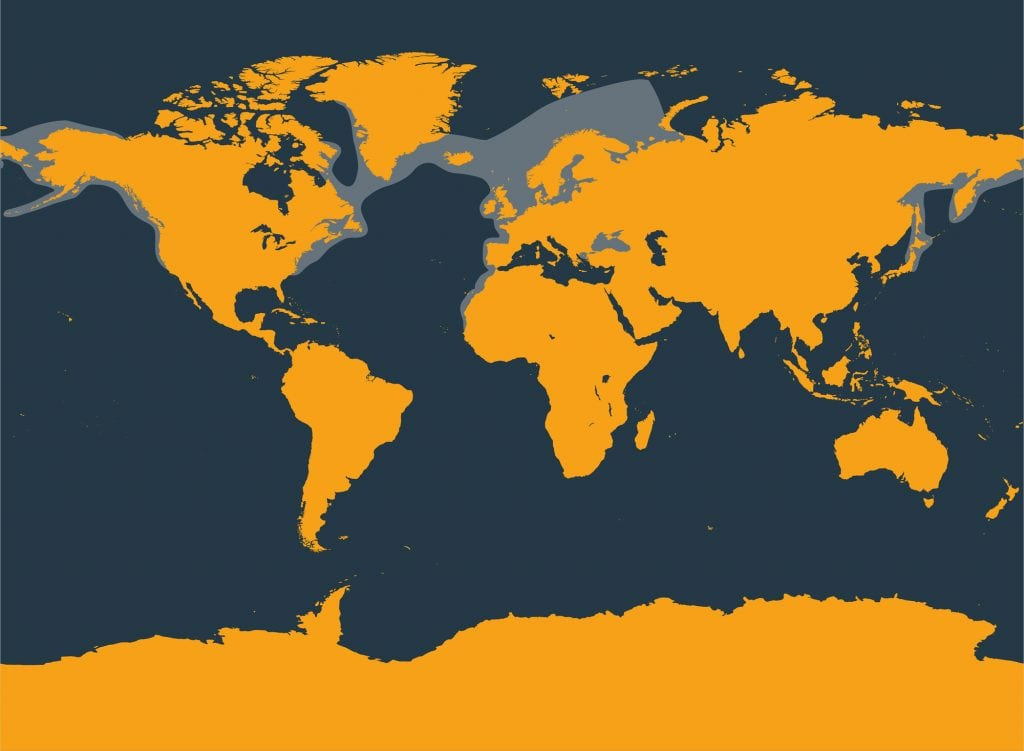Harbour porpoise distribution map
