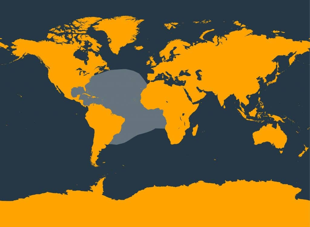 Atlantic spotted dolphin distribution map