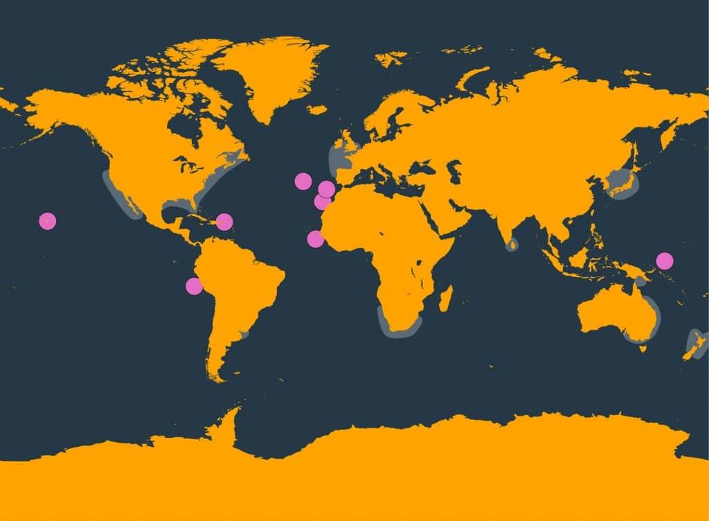 Pygmy sperm whale distribution map