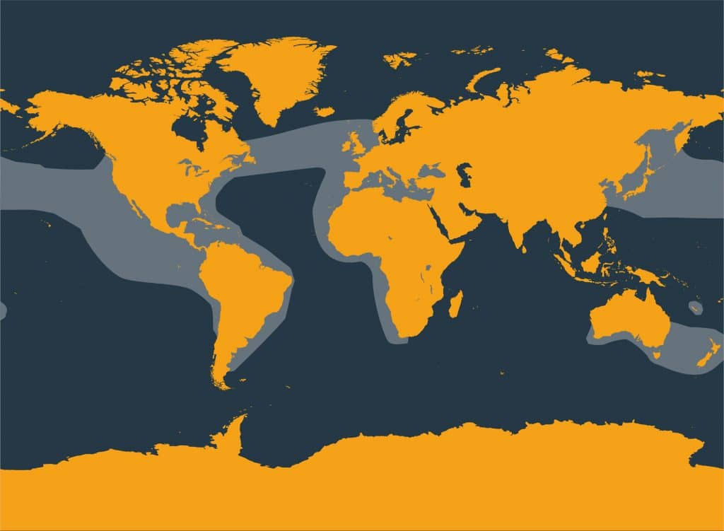 Short-beaked common dolphin distribution map
