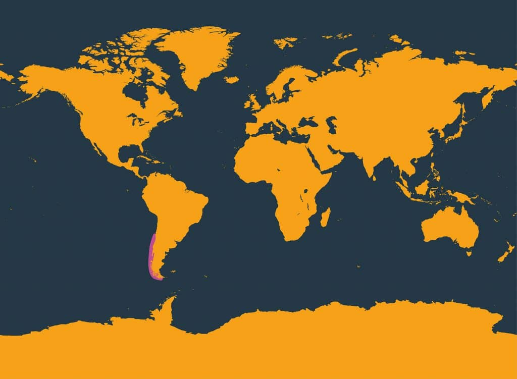 Chilean dolphin distribution map